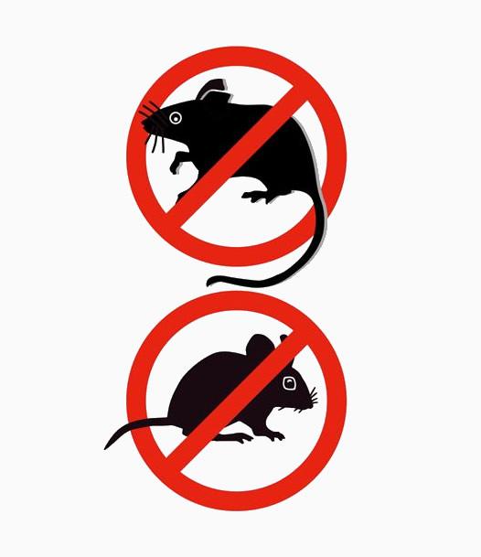 Derattizzazione Ratti e Topi